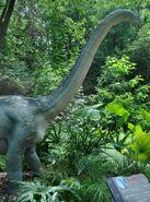 Dallas Zoo Brachiosaurus