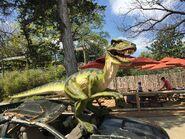 Dallas Zoo Velociraptor