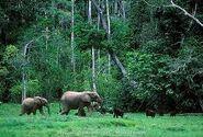 Gorillas and Elephants