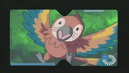 HnK Macaw
