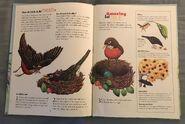 I Wonder How Parrots Can Talk (2)
