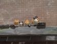 TTTE Cats