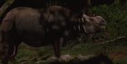 Singapore Zoo Night Safari Rhino