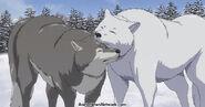 Wolf-cuddles
