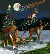ZT-Reindeer