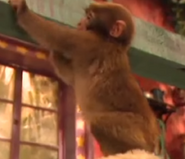 Zoboomafoo Japanese Snow Macaque
