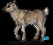 Baby Reindeer Calf