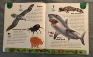 Deadly Creatures Dictionary (8)
