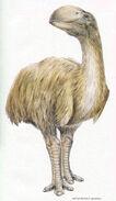 Dromornis stirtoni