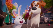 Secret-life-pets-disneyscreencaps.com-8096