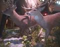 Toledo Zoo Deers