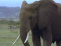 Amazing-animals-activity-center-elephant