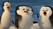 Baby penguins gasps