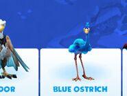 Blue ostrich