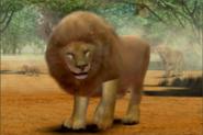Masai-lion-ztuac