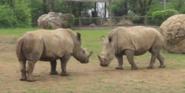 Nashville Zoo Rhinos