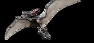Pteranodon-detail-header