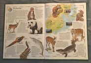 The Animal Atlas (21)