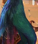 Toothiana's Butt
