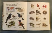 Visual Dictionary of Animals (99)