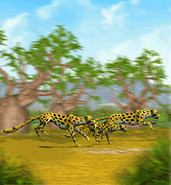 ZT-Cheetah