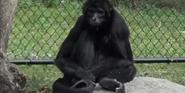 Zoo Miami Monkey
