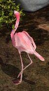 Flamingo-wildlife-park-2