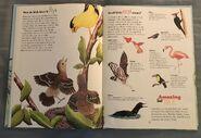 I Wonder How Parrots Can Talk (4)