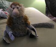 Monty the Proboscis Monkey