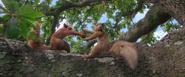 Peter Rabbit Squirrels