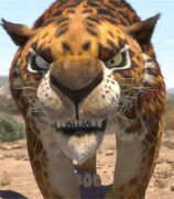 Phango the Leopard