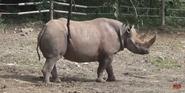 Pittsburgh Zoo Rhinos