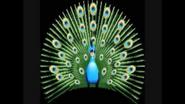 Safari Island Peacock