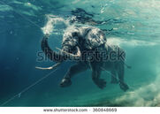 Stock-photo-swimming-elephant-underwater-african-elephant-in-ocean-with-mirrors-and-ripples-at-water-surface-360848669