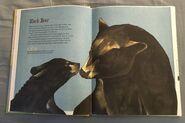 The Dictionary of Ordinary Extraordinary Animals (6)