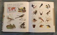 Visual Dictionary of Animals (94)