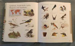 Visual Dictionary of Animals (94).jpeg