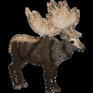Zoo Tycoon Irish Elk