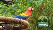 DAK Scarlet Macaw
