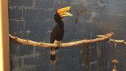 El Paso Zoo Hornbill