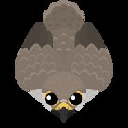 Mopeio Falcon