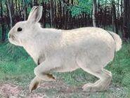 Snowshoe hare switch zoo