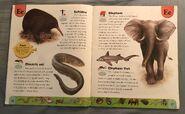 Weird Animals Dictionary (5)