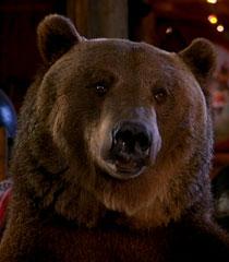 Archie the Bear