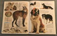 DK Encyclopedia Of Animals (69)