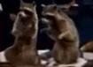 Evan Almighty Raccoons