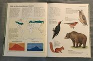 Macmillan Animal Encyclopedia for Children (4)