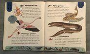 Ocean Life Dictionary (7)
