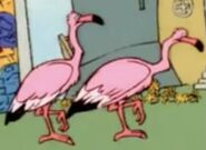 TNAOWTP Flamingos