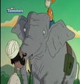 TWT Asian Elephant